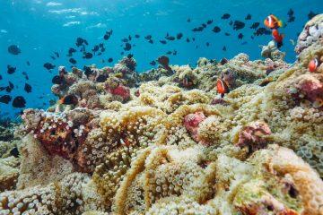 Top Dive Sites 55