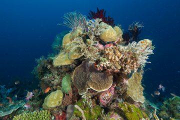 Top Dive Sites 59