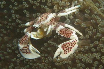 Top Dive Sites 52
