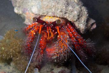 Top Dive Sites 65