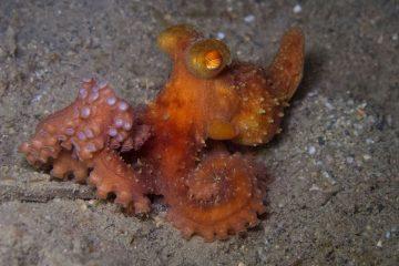 Top Dive Sites 66