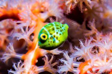 Top Dive Sites 62