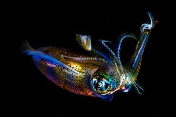 Top Dive Sites 61