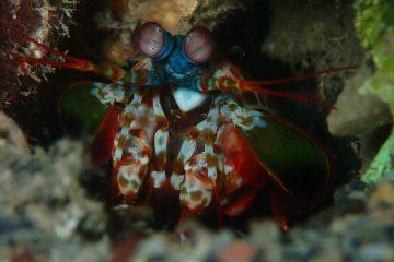 Top Dive Sites 63