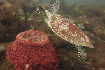 Top Dive Sites 68