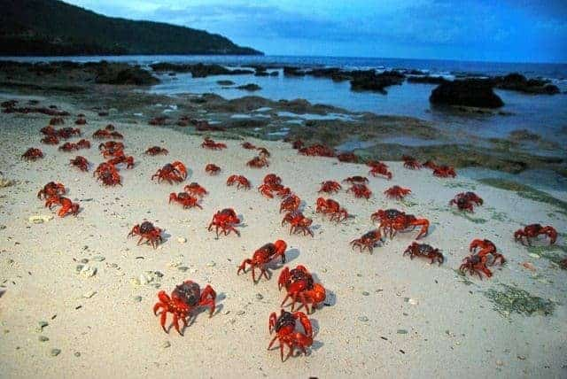 crabs for christmas
