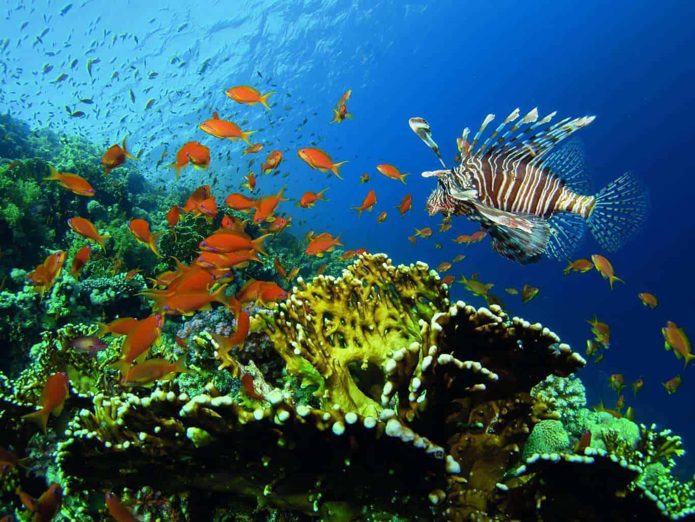 Shot 5 Lionfish Reef