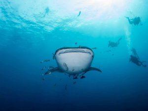 better underwater photos 6
