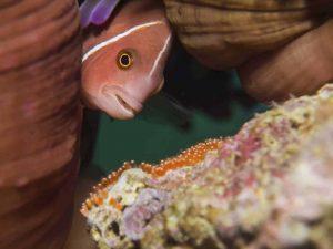 better underwater photos 4