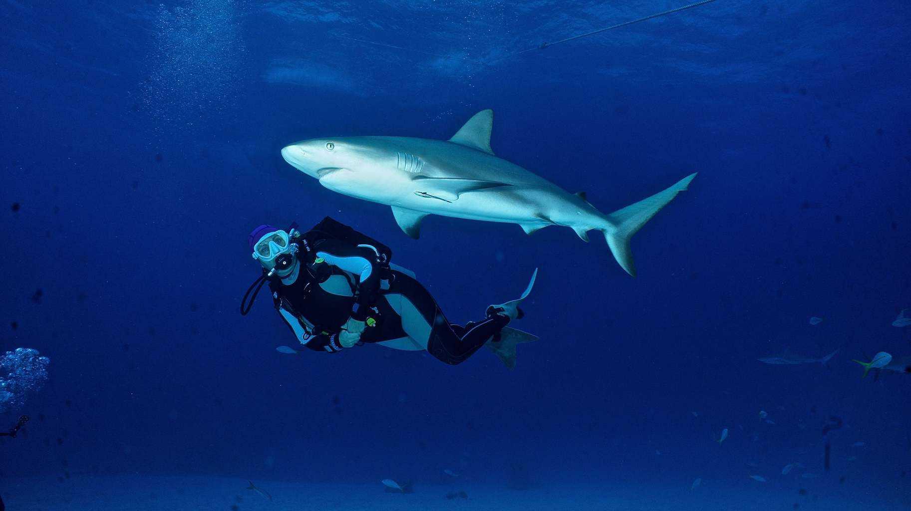 Dive Bahamas 3