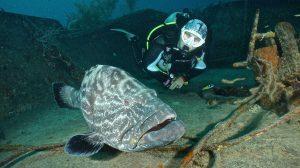Dive Bahamas 1