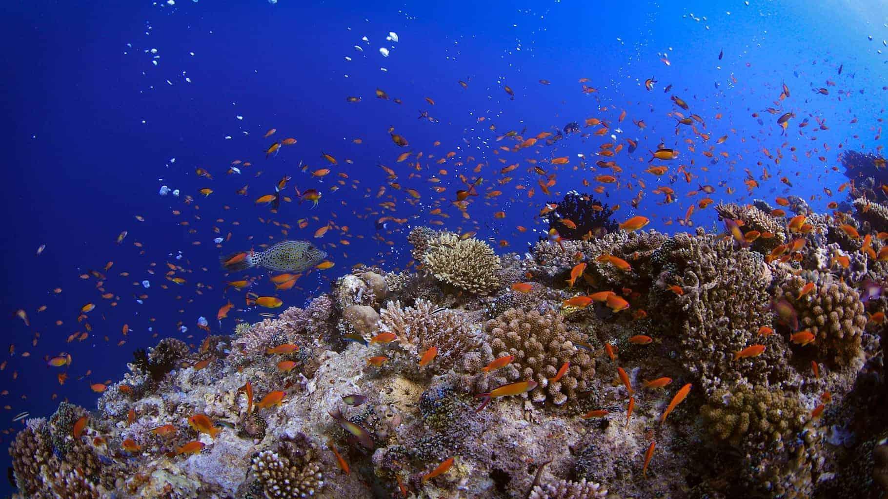 Carpe Diem Maldives 5