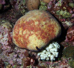 Carpe Diem Maldives 1