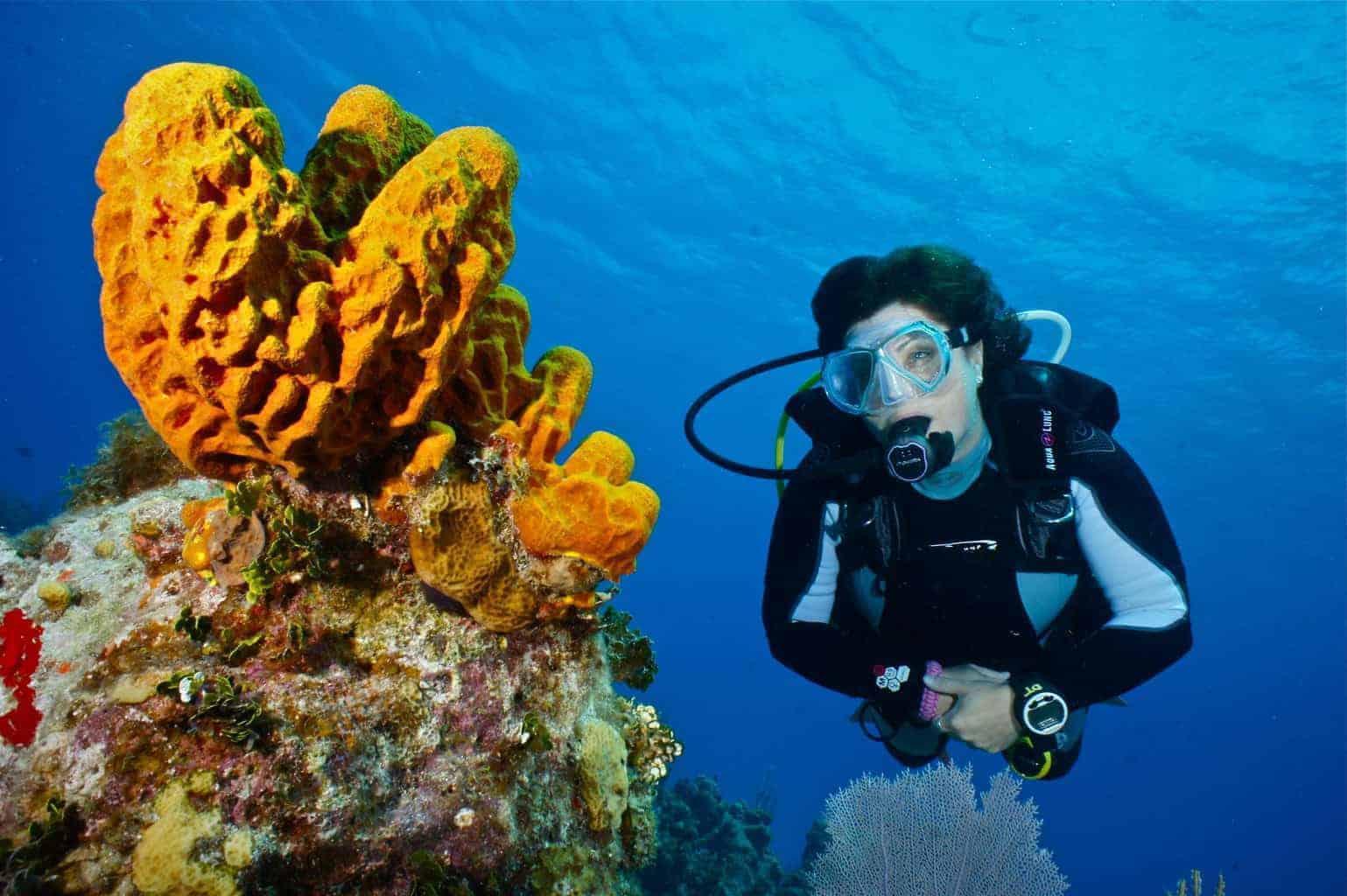 Dive like a pro