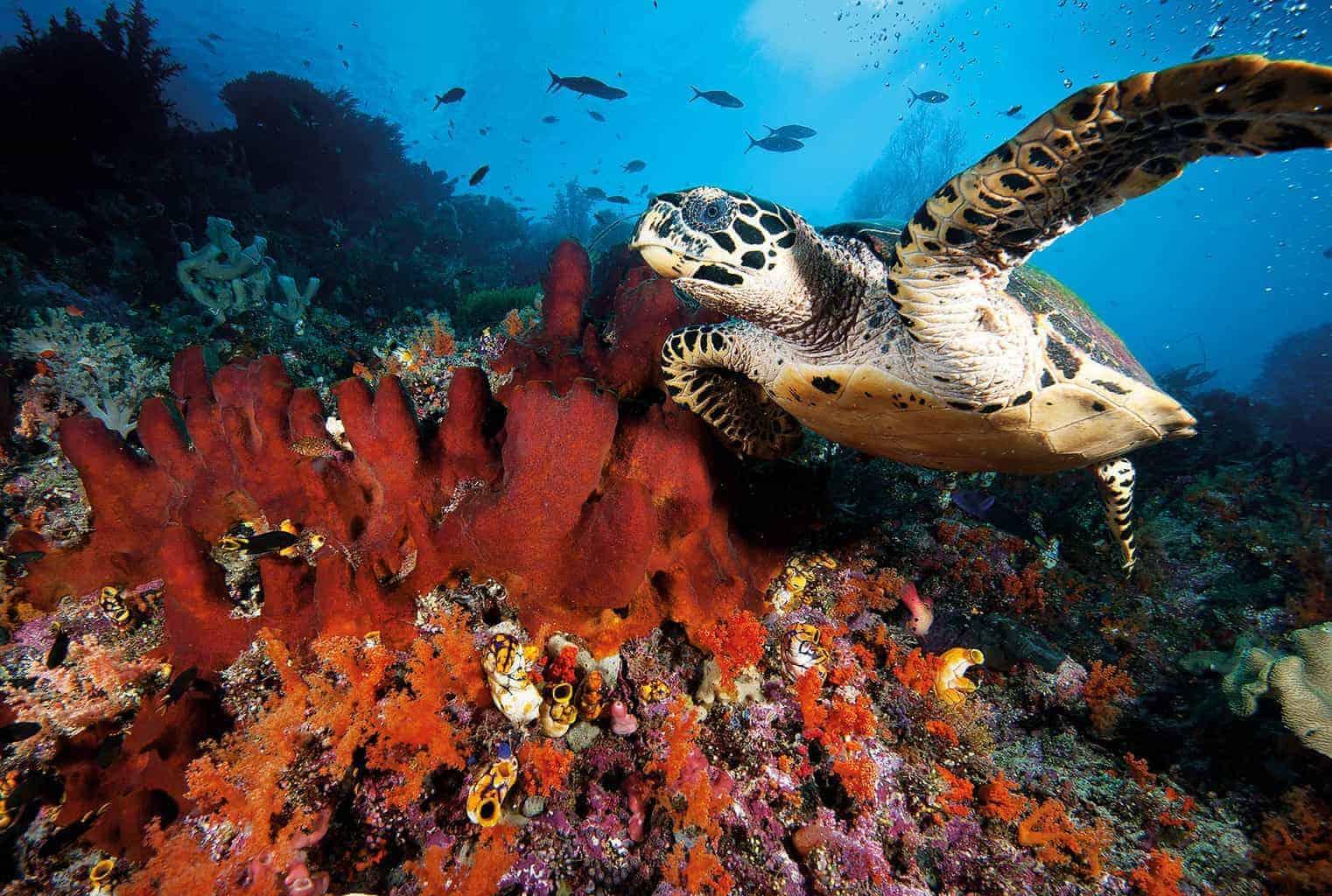 Gavin Anderson turtle