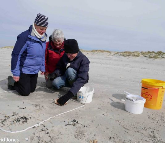 The Big Microplastic Survey