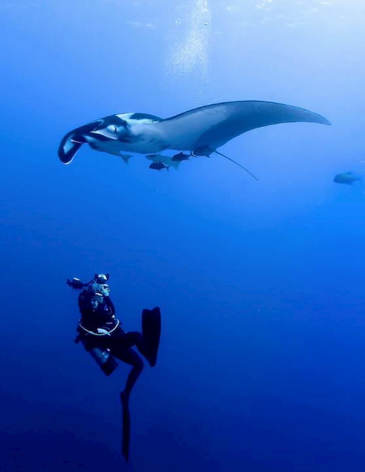 underwater Photographer Sylvie Ayerunderwater Photographer Sylvie Ayer