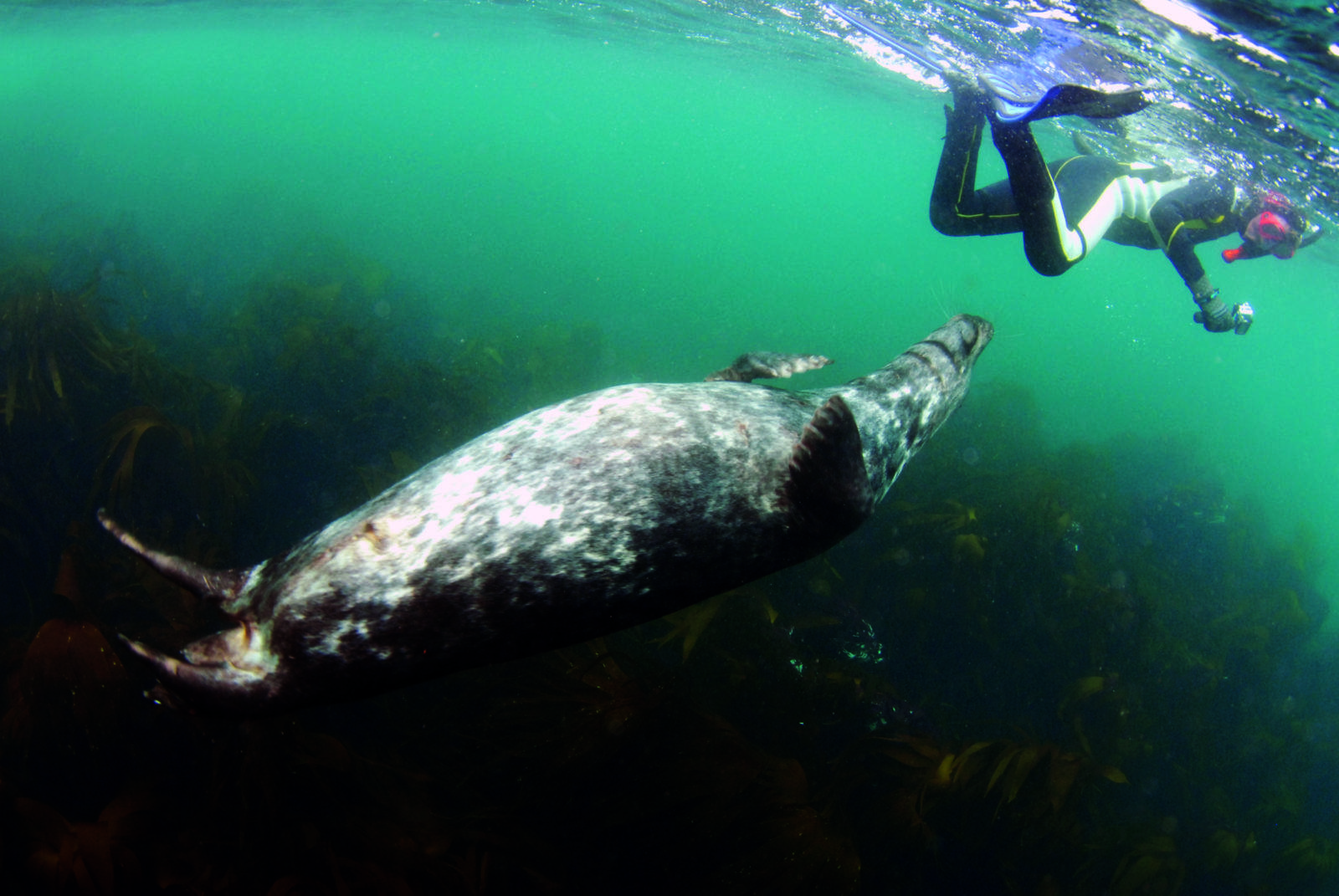 Seal Encounter Cornwall by Jeremy Cuff