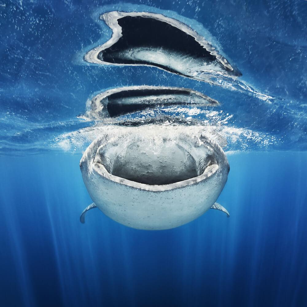 Underwater Photographer of the Week: Jacob Degee
