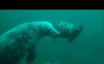 Farne Islands Diving