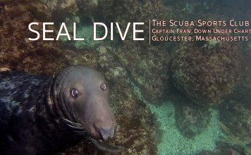 Diving in Gloucester Massachusetts with Seals