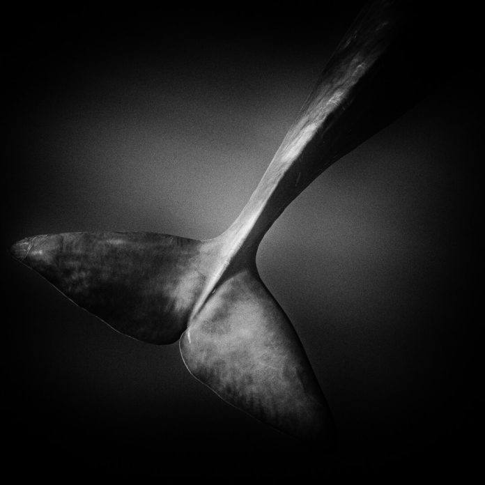Underwater Photographer of the Week Wade and Robyn Hughes