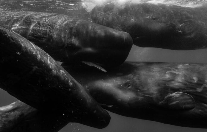 Underwater Photographer of the Week: Wade and Robyn Hughes
