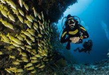 Scuba Diver Medical Q&A: Can you still scuba dive when on medication for atrial fibrillation