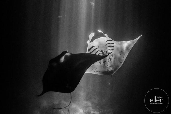 Underwater Photographer of the Week Ellen Cuylaerts