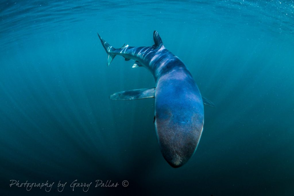Underwater Photographer of the Week Garry Dallas