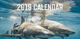 Underwater Photographers Unite for Shark Charity Calendar