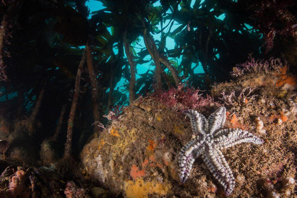Underwater Photographer of the Week: Austin Ferguson