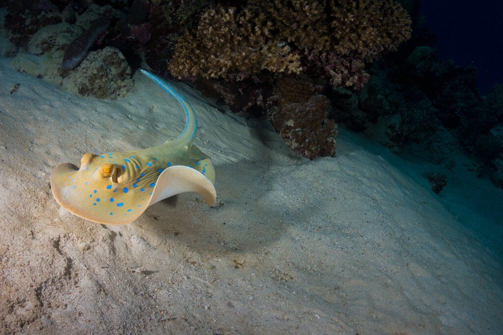 Underwater photographer Austin Ferguson 1