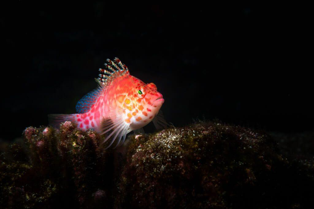 Underwater Photographer of the Week Austin Ferguson