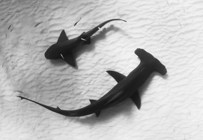 Underwater Photographer of the Week Jillian Morris