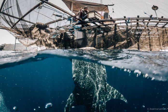 Underwater Photographer of the Week - Joanna Lentini