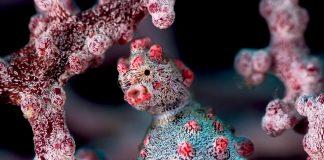 Underwater Photographer of the Week Sean Chinn