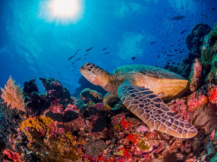 Underwater Photographer of the Week: Sean Chinn