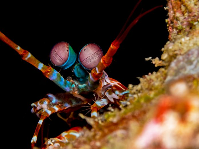 Underwater Photographer of the Week Sean Chinn