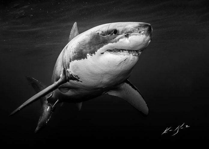 Underwater Photographer of the Week Ken Kiefer