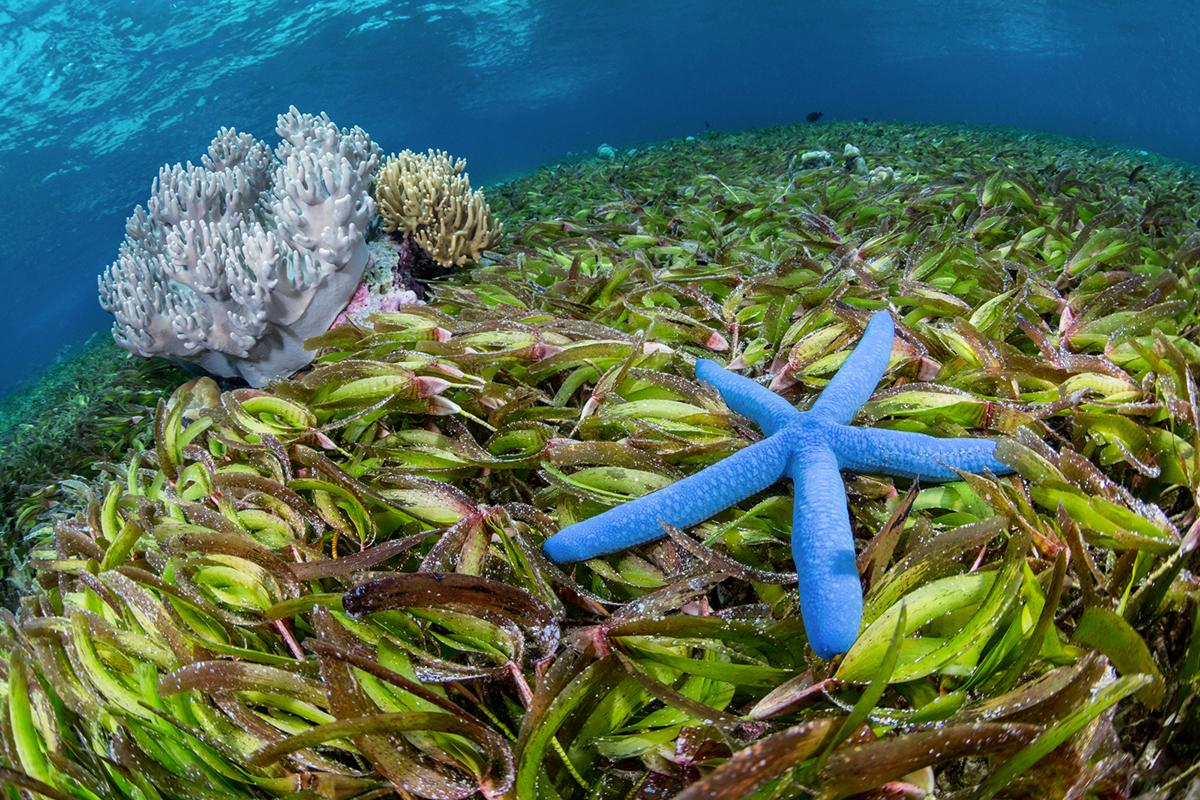 Wakatobi seagrass