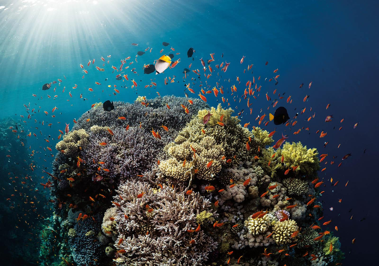 Coral Reef Sun Beams - Photographs by Paul Duxfield