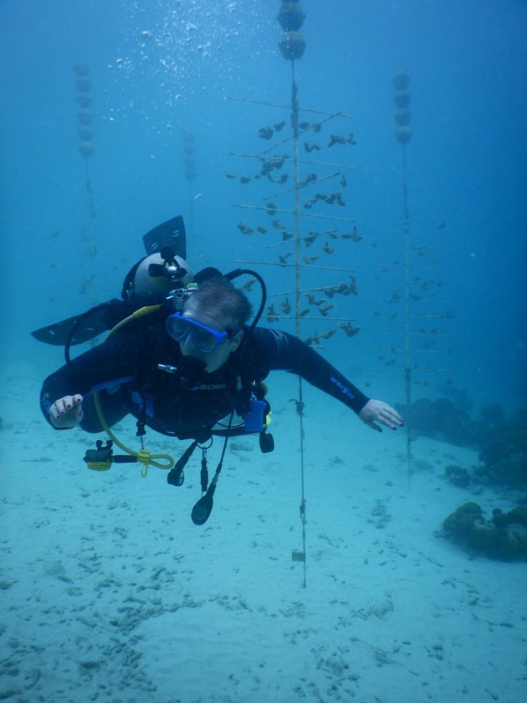 Debra Lilley diving at a coral nursery in Bonaire.