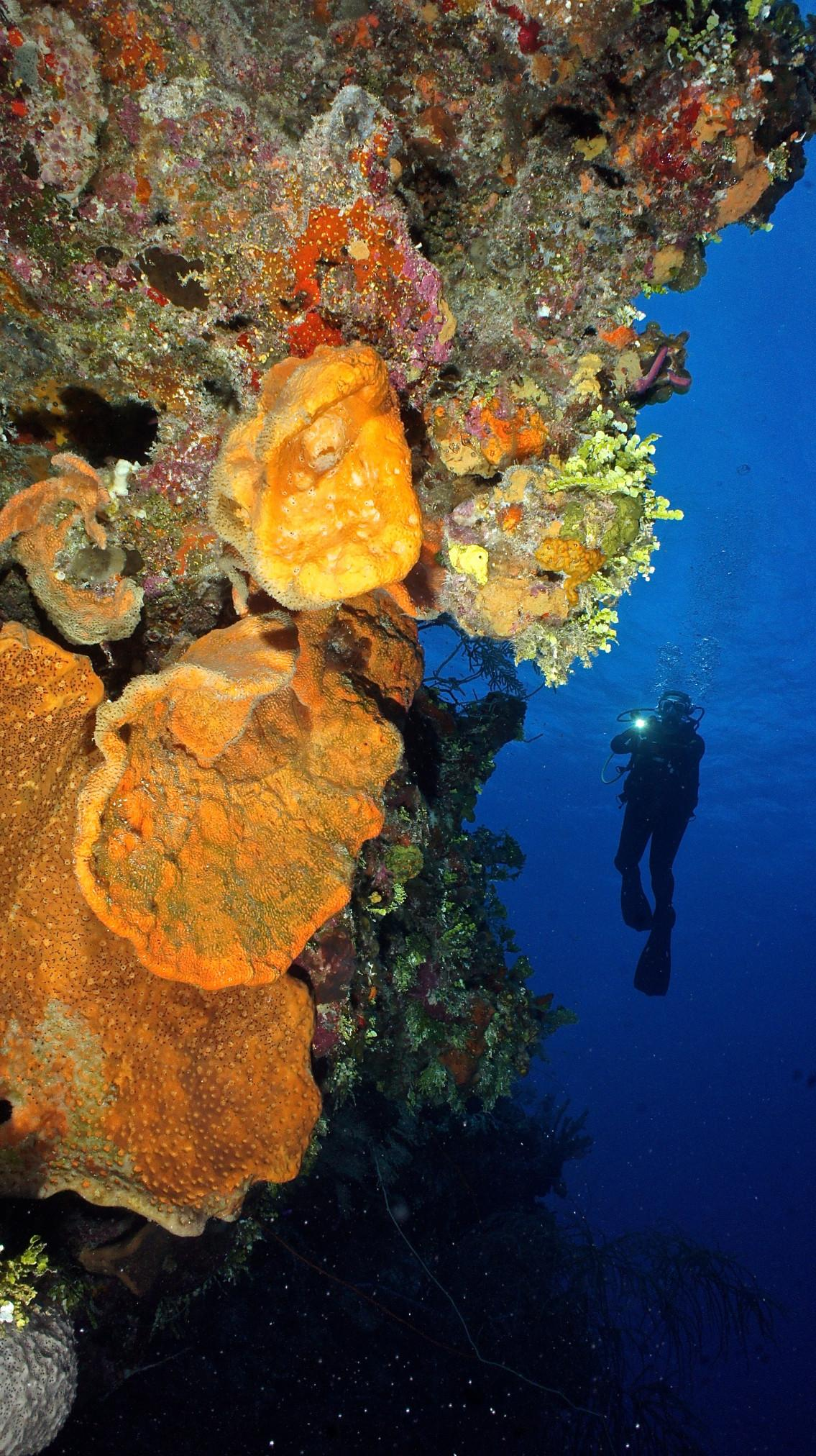 Islands of the Bahamas are a diving paradise 4