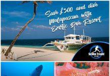 Scuba Travel, Malapascua, Philippines, Exotic Island Diveresort