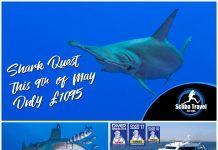 Scuba Travel, Hurricane, Shark Quest, Red Sea, Egypt