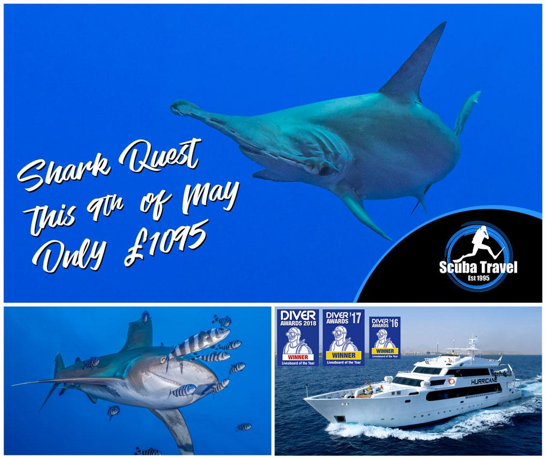 Scuba Travel, Hurricane, Shark Quest, Red Sea, Egypt