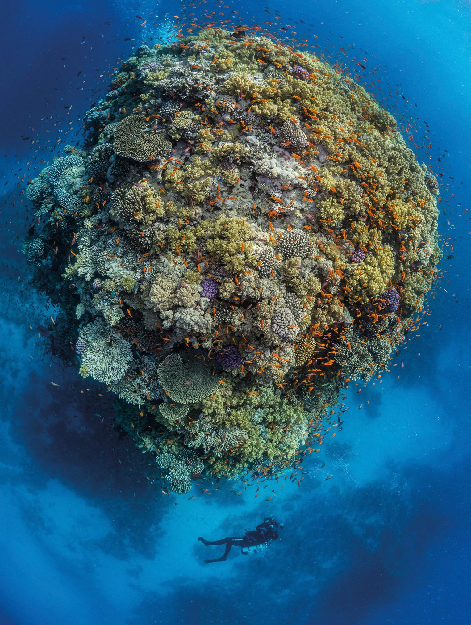 Top Down Pinnacle with Diver - Photographs by Paul Duxfield