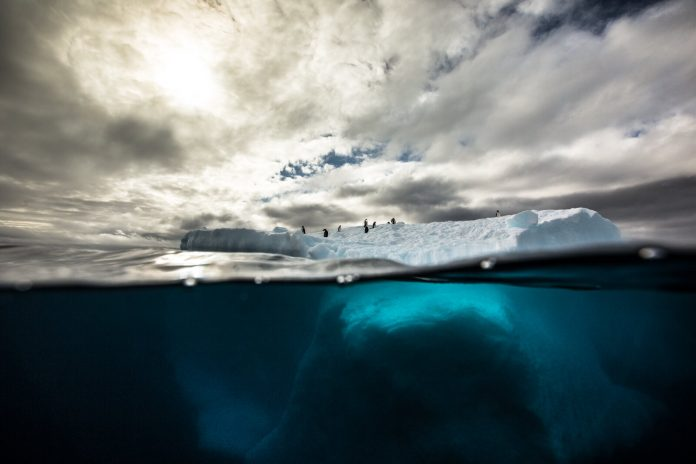 Underwater Photographer of the Week Jessica Farrer