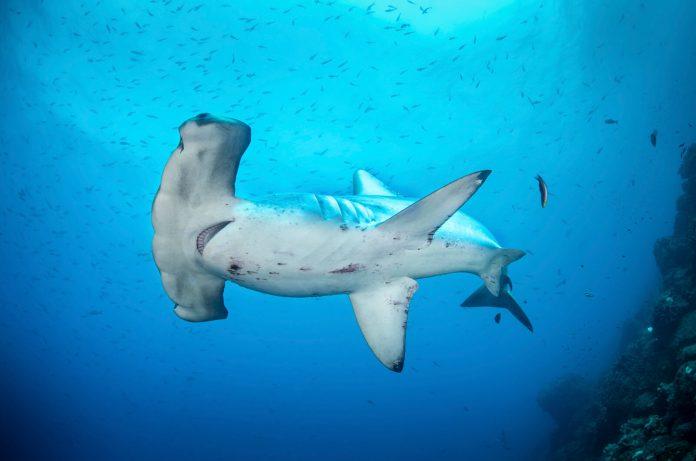 Underwater Photographer of the Week Richard Barnden